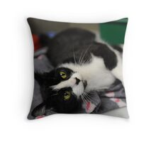 Wilma the cat Throw Pillow