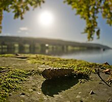 An Pine Cone View by photoshotgun