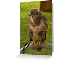 Common Buzzard Greeting Card