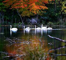 A Fine Autumn Day II - Americana Series  by Michelle BarlondSmith