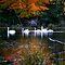 Autumn Waterfowl