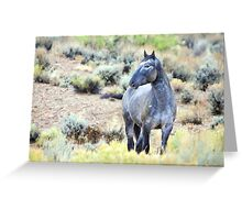 The Watchful Eye - Wild Blue Roan Stallion Greeting Card
