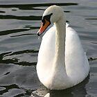 swan by DazF
