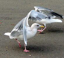 Seagull Pas de deux by Beth Johnston