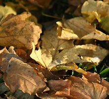 autuum leaves by DazF