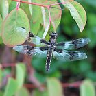 Dragonfly Resting on Katsura Tree by Beth Johnston