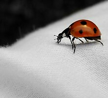 LADYBUG ON WHITE CLOTH by Sandra  Aguirre