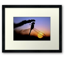 Before Night Falls Framed Print