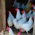 "Happy Hens ,,,""Welcome to Our House"" by MaeBelle"
