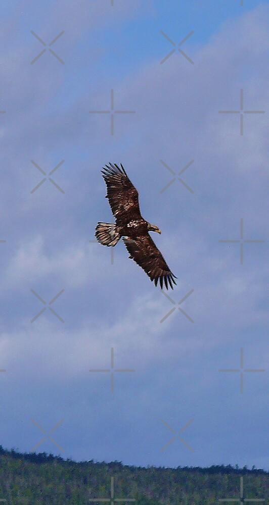 Wanna Fly So High by Gail Bridger