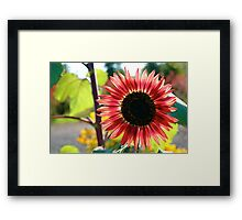 backlit Framed Print