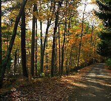 country road by Lynne Prestebak