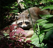 CATCHING A FEW RAYS by Jean Gregory  Evans