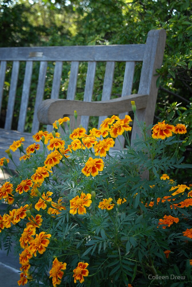 Marigolds around a Bench by Colleen Drew
