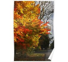 Country Tree Poster