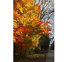 Country Tree Photographic Print