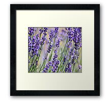 Lavender Patch Framed Print
