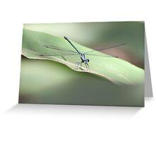 Mr Dragonfly Greeting Card