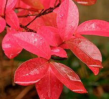 Rain on Red by Patty Boyte
