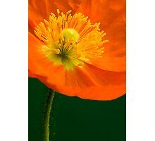 Happy Poppy Photographic Print