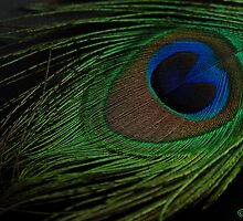 A PEACOCK FEATHER by RakeshSyal