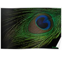 A PEACOCK FEATHER Poster
