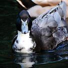 Pond Duck by Tori Snow