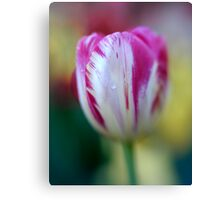 Tulip with Lensbaby  Canvas Print