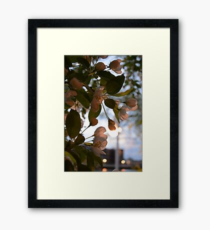 Everything's still blooming in Wisconsin Framed Print