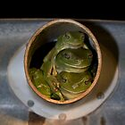 Green Frogs by Dean Gale