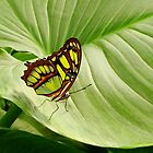 Butterfly-1 by Curtis  Sheppard