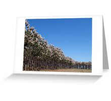 Sweep of trees Greeting Card