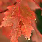 Fall Color In Softness by Deborah  Benoit