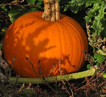Bumkins Pumkin by Pamela Jayne Smith
