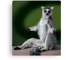 Yoga for Lemurs Canvas Print
