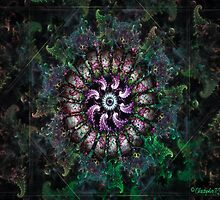 Anemone 2 by christopher r peters