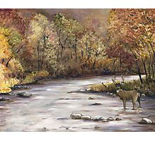 Fall Whitetail Deer Photographic Print