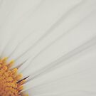 Daisy - Antique Finish by Candy Gemmill