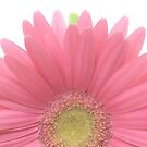 Pink by Candy Gemmill