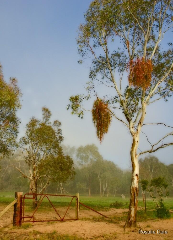 Pioneer Park ~ No 1 by Rosalie Dale