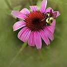 The Flower and the Bee by CarolM