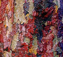 Every Tree tells a story#14 by Julie Marks