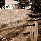 Barley Field  by Craig Blanchard