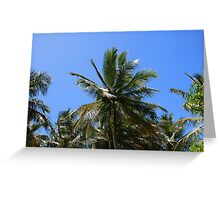 trancoso's cocconut-tree Greeting Card