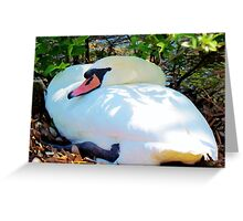 Swan On Her Nest Greeting Card