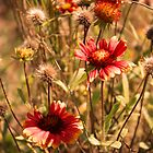 October Wildflowers by Jennifer Rigsby