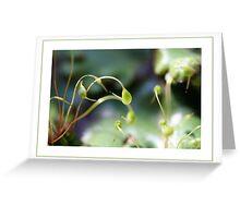 Moss sporangia Greeting Card