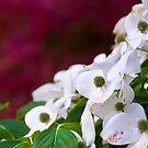 "flowers saying ""I love you"" by Dan Shalloe"