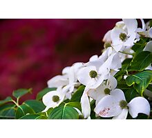 """flowers saying """"I love you"""" Photographic Print"""