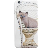 Awwdorable Seal Point Kitten In Wicker Chair - Animal Rescue Portraits iPhone Case/Skin